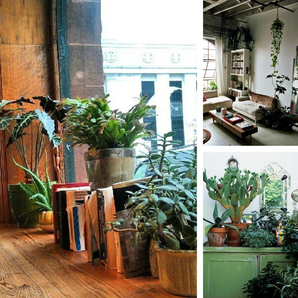 Decorating Dilemma: House Plants