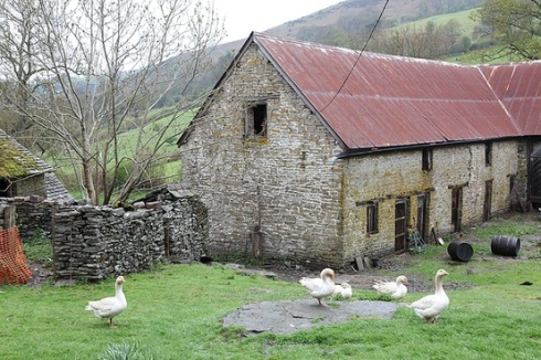 stone farmhouse with geese in Wales