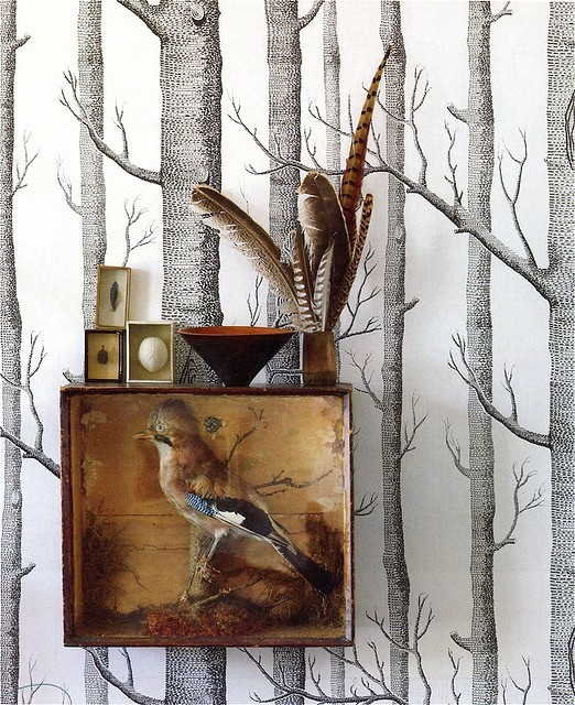 silver birch wallpaper taxidermy bird egs and feathers