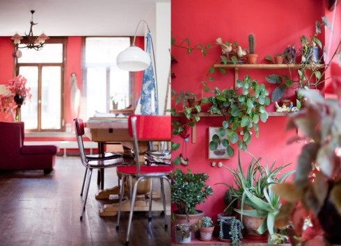 red room with house plants Belgium
