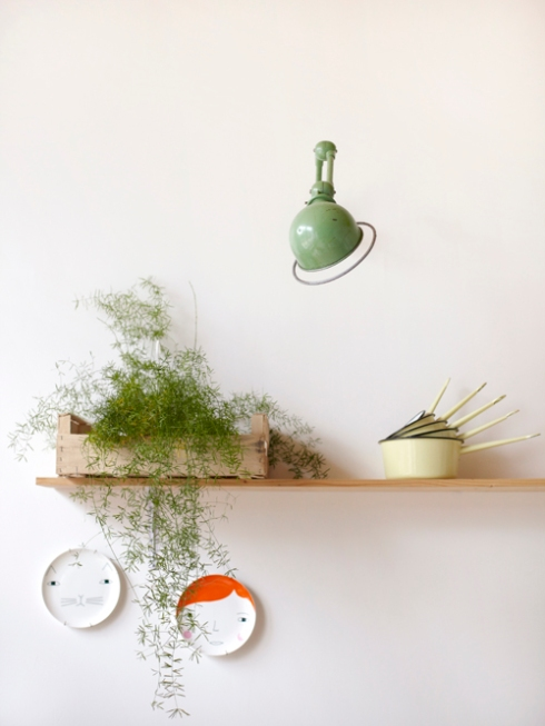 kitchen shelf with plant