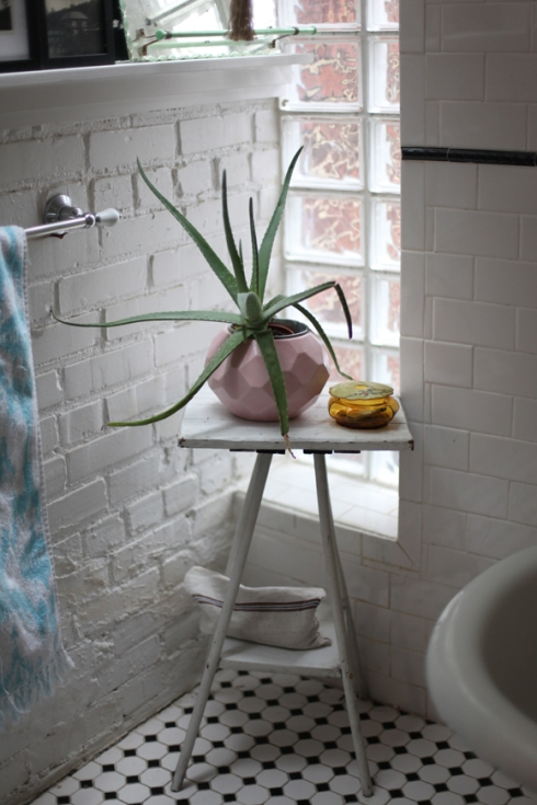 plant-in-bathroom