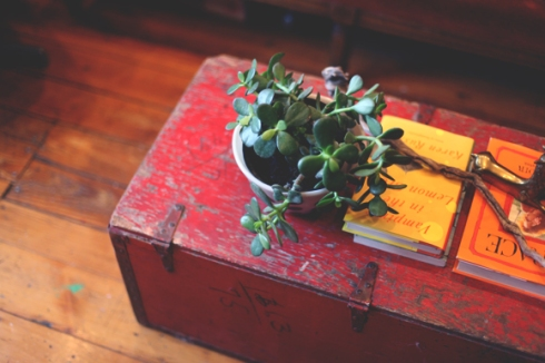plant-on-vintage-chest