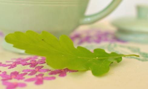 close up oak leaf