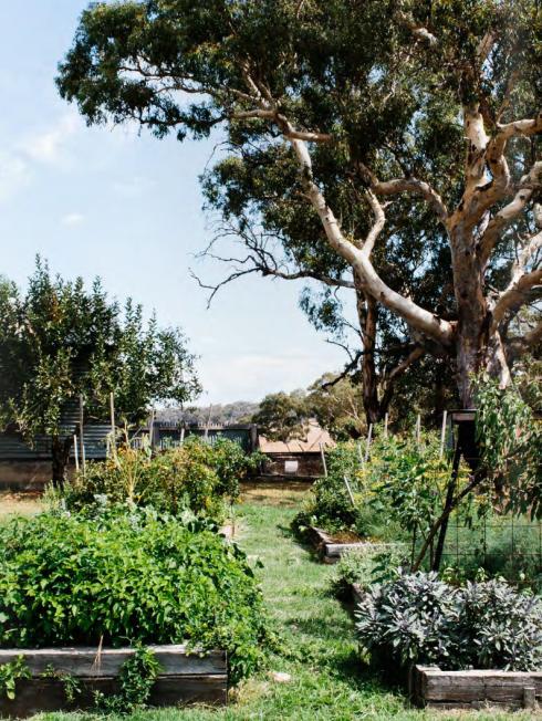 vegetable garden Australia