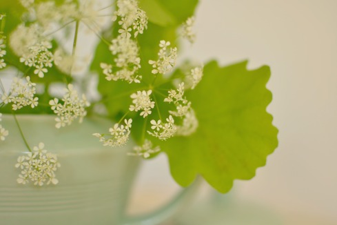 cow parsley and oak leaves close up