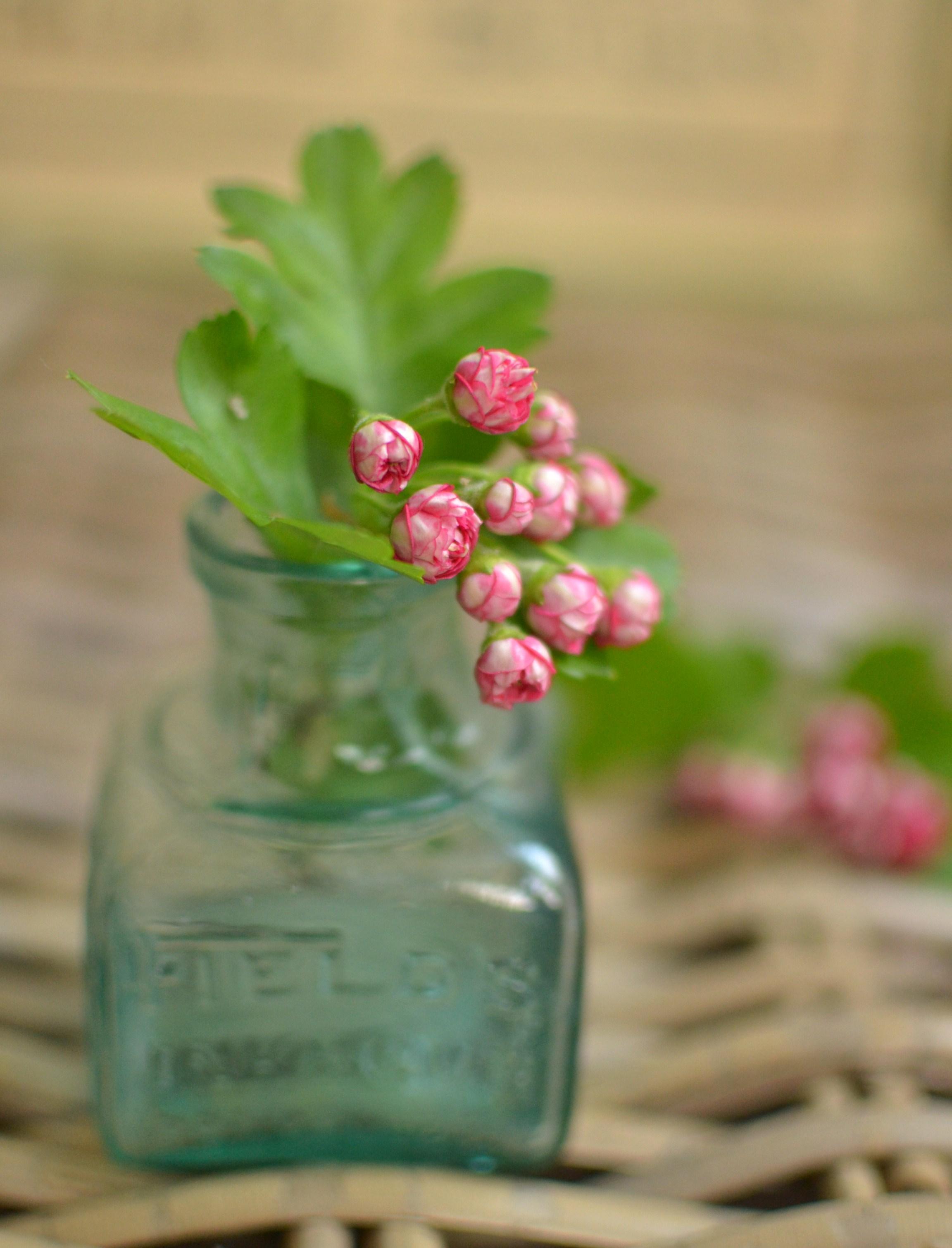 pink hawthorn blossom in vintage ink bottle