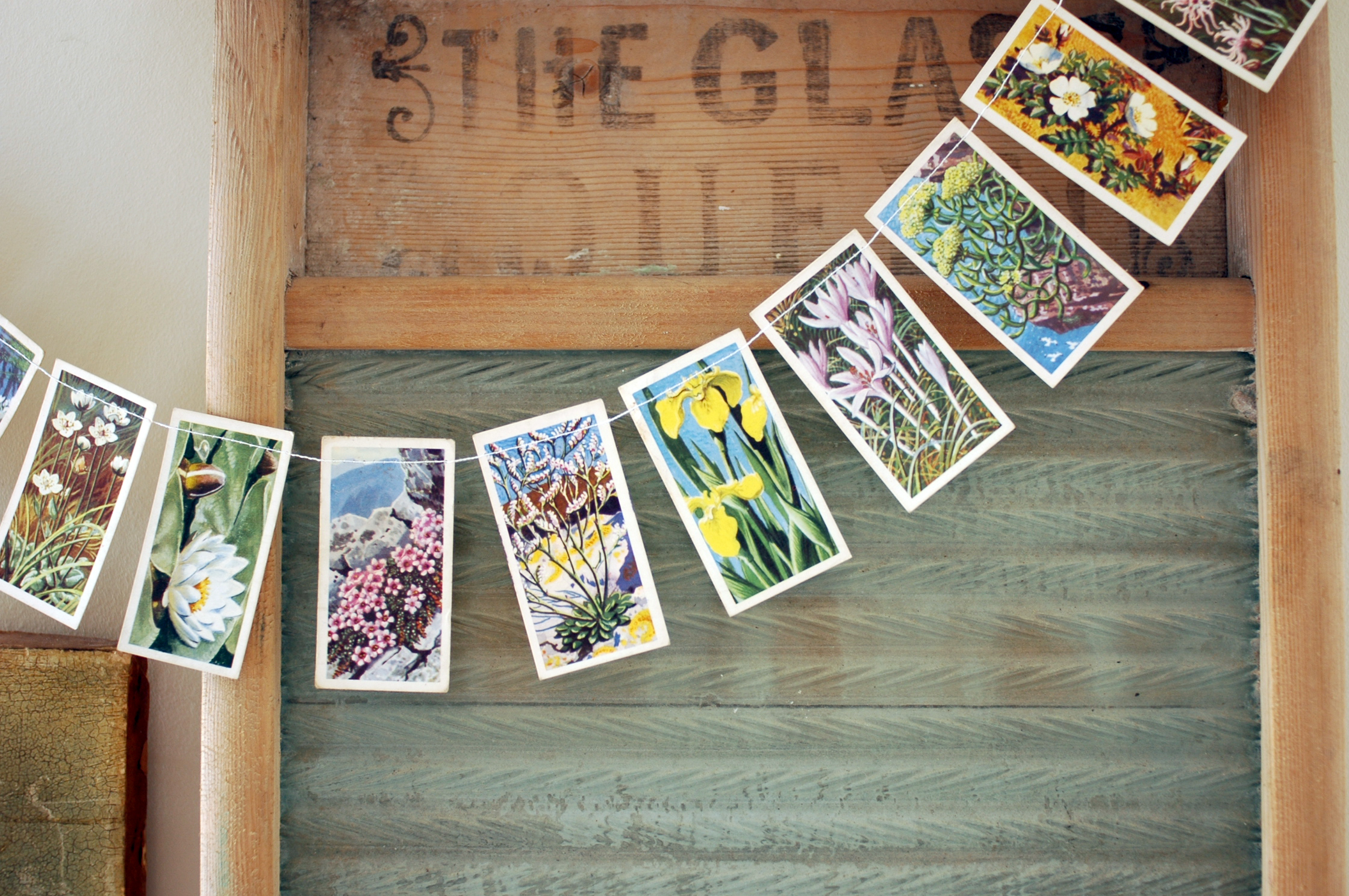 cigarette card bunting