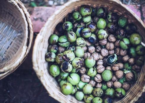 gathering walnuts whole larder love