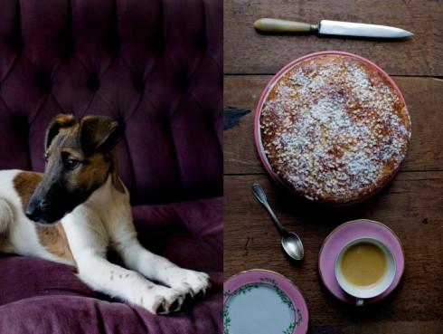 puppy and cake manger blog