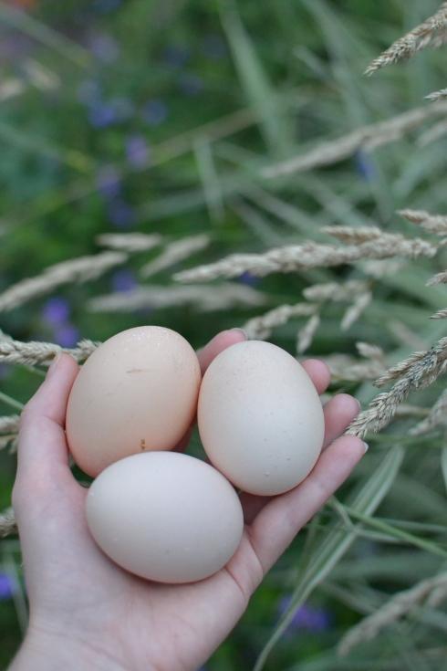 fresh free range eggs