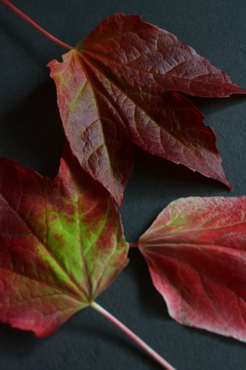 red leaves Decorator's Notebook blog