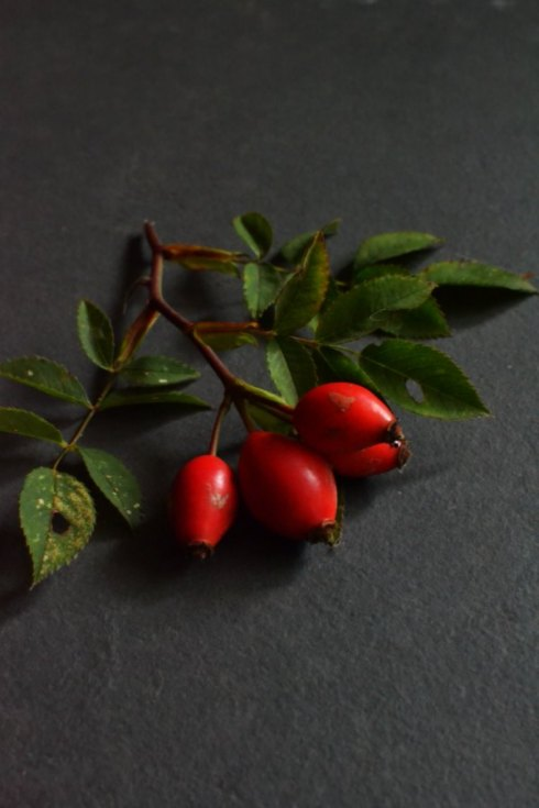 rosehips Decorator's Notebook blog