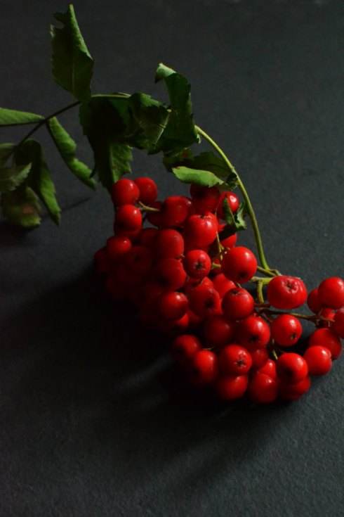 rowan berries Decorator's Notebook blog