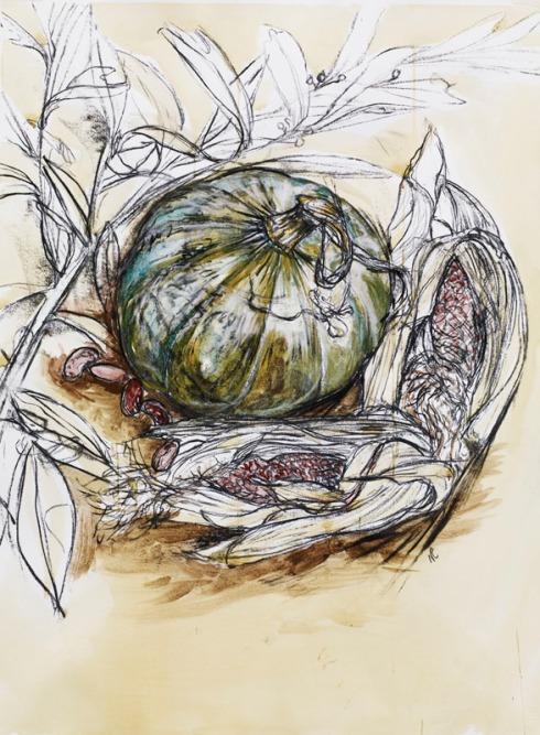 squash drawn by Natasha Clutterbuck artist
