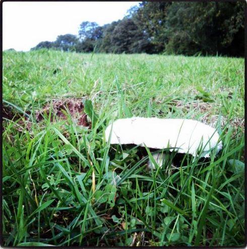 field mushroom growing