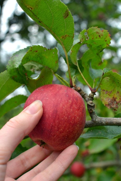 hand picking a red apple