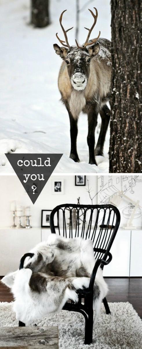 reindeer rug decorating trend