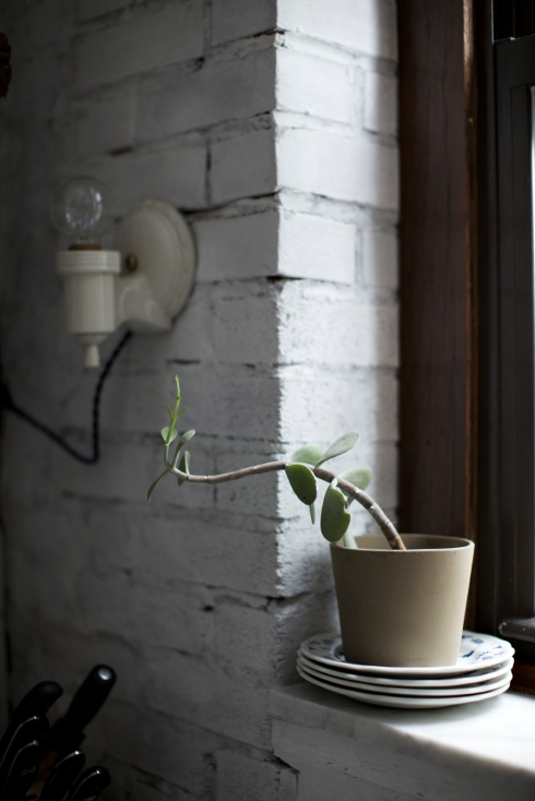 house plant on window sil